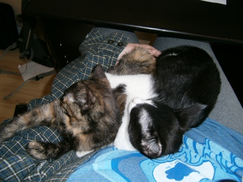 The kittens taking a nap on my lap. Wonder how much longer they'll be able to do that. I'm hoping my lap isn't big enough to hold two grown cats.